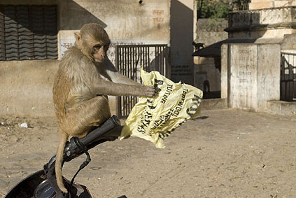 monkeynews