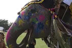 ... и макияж для слона
